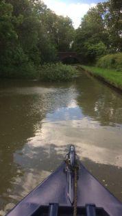 Midlands Canal trip narrow bridge and tree