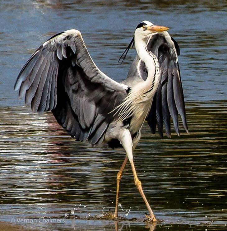 heron - strut