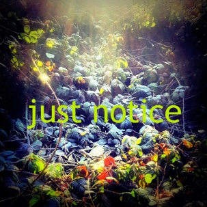 Notice things 6