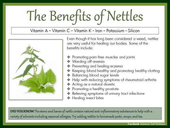 Nettles benefits