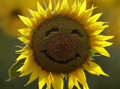 """""""like a human Sunflower"""""""